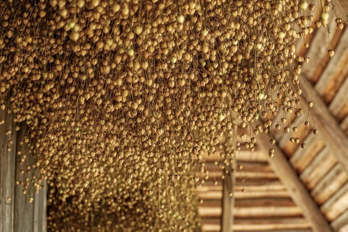 Семена льна – польза для здоровья и основные факты